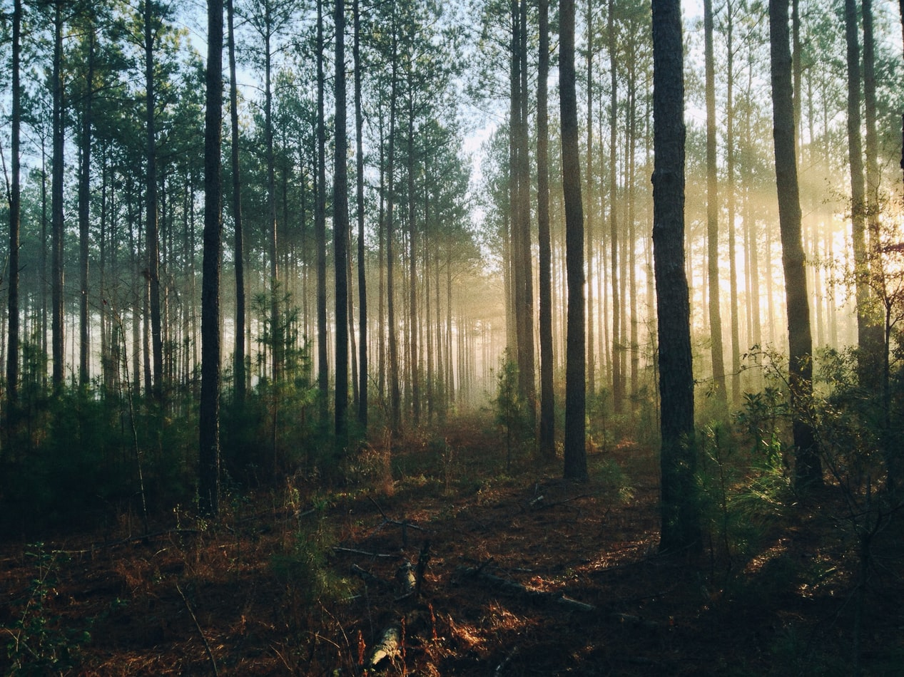Du kannst den Wald verlassen, der Wald aber verlässt dich nie! -Storl